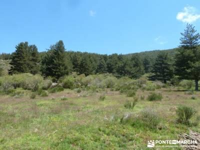 El pinar del Puerto de Navafría;conocer gente en madrid;la acebeda